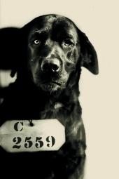 pep-the-dog